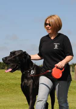 Regular exercise for your dog at Natcott Canine Hotel